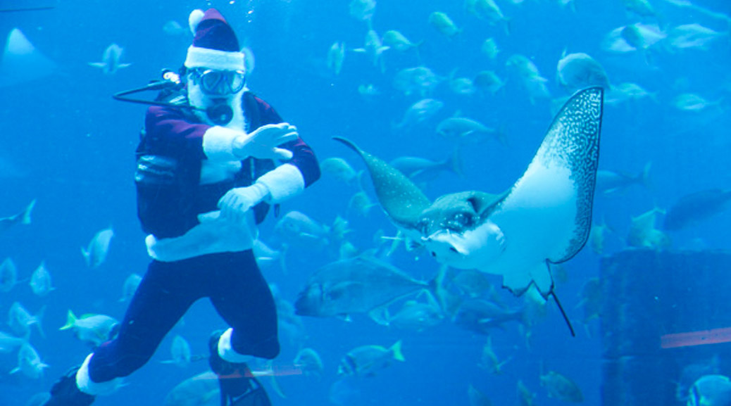 Santa feeds the fish!