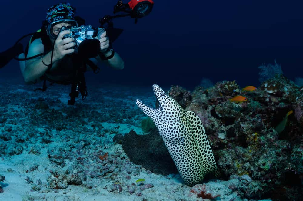 Scuba diving taking a photgraph of a eel in the Maldives