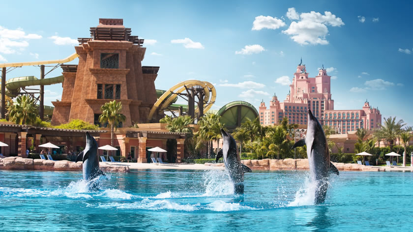 Swim with Dolphins at Atlantis